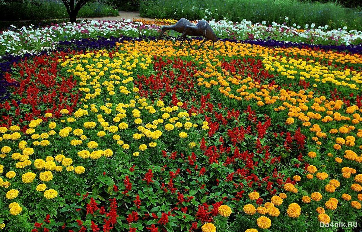 семена цветов однолетки