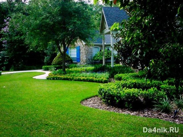 как вырастить газон на даче своими руками