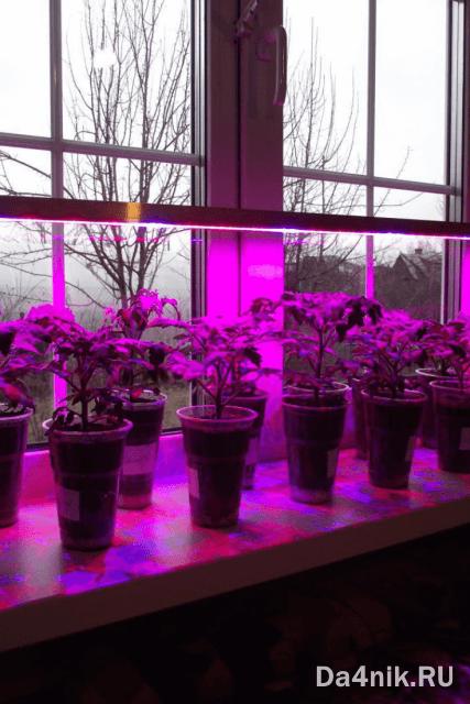Фитолампы для выращивания рассады