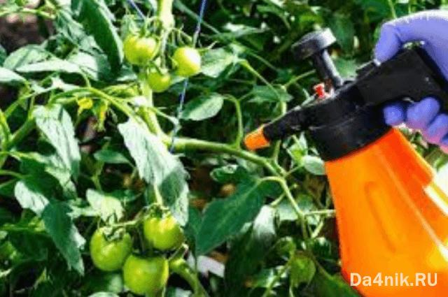 обработка помидоров