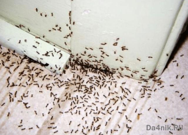 борная кислота от муравьёв