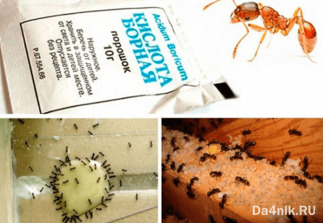 приманки для муравьев