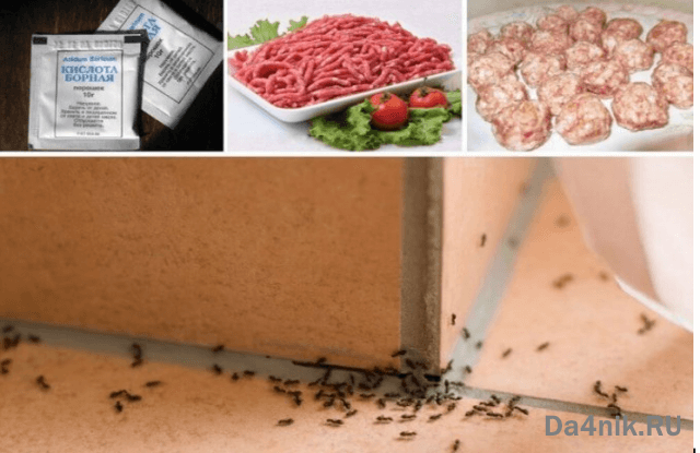 приманки для муравьев из фарша