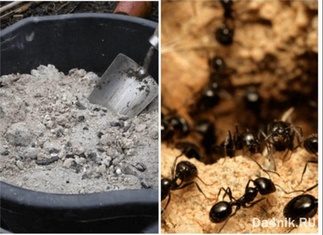 ловушка из золы для муравьев