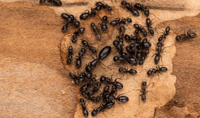 уничтожение муравьев на даче